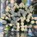 Белые тюльпаны без упаковки